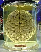 Amazing Simple Gear!!!-cerveau.jpg