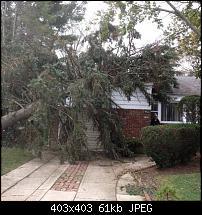 Elmont NY No Power No Heat and A Big Tree-394101_492015794164784_563894259_n.jpg