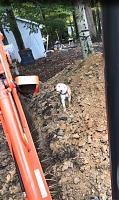 Defunk Studios - New Build-mud-dog.jpg