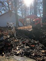 Defunk Studios - New Build-super-mud-dog.jpg