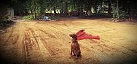 Defunk Studios - New Build-super-dog1.jpg