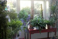Studio Plants-plantzzz.jpg