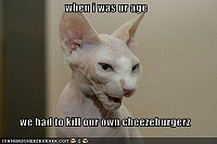 Cats are lucky!-funny-pictures-old-cat-talks-about-his-childhood.jpg