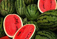 sE Electronics V3-watermelons.jpg