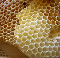 Aston Microphones Ltd. Shield GN-honey_comb.png