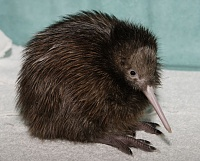 the FINAL word on the 414-060217_kiwi.jpg