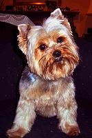 Studio Mascots-the_real_littledog.jpg