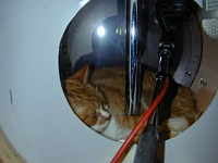 Studio Mascots-drumcat.jpg