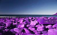 PURPLE AUDIO BIZ PREAMP-purple-rocks.jpg