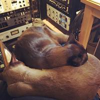 Today in the studio... (photo upload thread)-a9ca0e25-e631-446f-921a-1f68317859a3.jpg