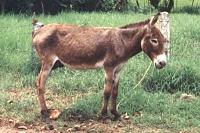 Goodbye!-donkey-1.jpg